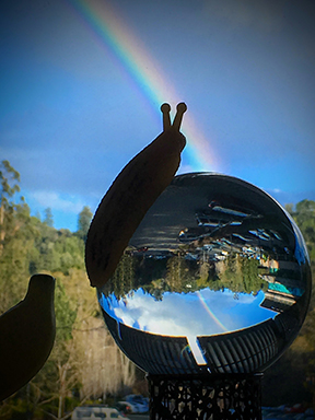 Banana Slug in a Rainbow