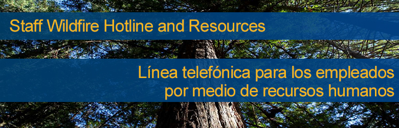 Spanish and English Wildfire Resources on a tree background